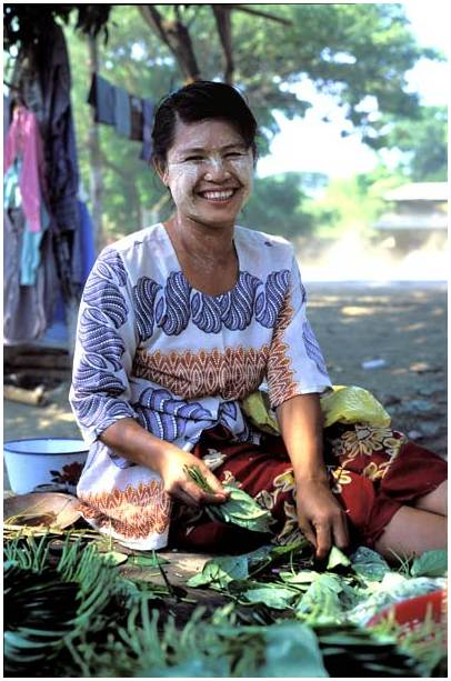 Young woman preparing leaves of betel